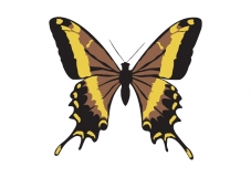 Papillon-002