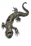 Salamandre-02